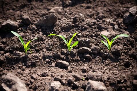 いい芽が出るような、そんな土を。